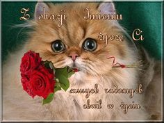 Happy Birthday Wishes Cards, Humor, Cats, Animals, Happy Birthday Greeting Cards, Gatos, Animales, Animaux, Humour