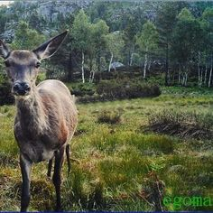 #CCTV doesn't just help catch criminals, it helps capture images like this! #nature #deer #trees #wildlife #security #photography #business #instagood