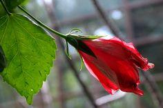 flower by Zbigniew Włodarski on YouPic