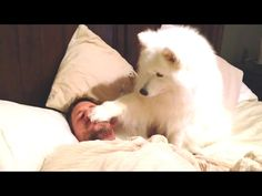 Funny Dogs Waking Up Their Owners Compilation -  #dogs #funnydogs #puppy #doglover #animal #pet #cute #pets #animales #tagsforlikes Stop Your Dog's Behavior Problems! Click HERE to learn how! JOIN TEAM 2M! NEW VIDS MON, WED & FRI @ 5ET!! LIKE, COMMENT & SHARE!!! ******************************************* TWITTER:  FACEBOOK:... - #Dogs