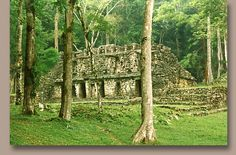 Mayan city Yaxchilan of mexico connected to Yakshas & Yakshinis of India, Guards in Wat Phra Kaew Buddhist temple of Thailand, Demi-gods in Jainism Mayan Cities, Buddhist Temple, American Indians, Archaeology, Thailand, Mystery, Outdoor Structures, Nature, Plants