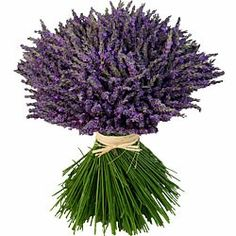 Ahh the Smell Of Lavender