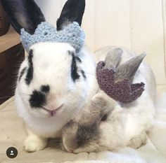 bunny crown// crown for pet rabbit// pet rabbit accessories// pet costume// costume for pet rabbit// guinea pig costume by meganismean on Etsy https://www.etsy.com/uk/listing/491287182/bunny-crown-crown-for-pet-rabbit-pet