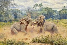 The Last Gladiators<br>SCI 2009 Conservation Artist of The Year Print