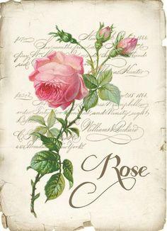 Rose for decoupage Decoupage Vintage, Vintage Diy, Vintage Labels, Vintage Ephemera, Vintage Cards, Vintage Paper, Vintage Postcards, Vintage Flowers, Images Vintage