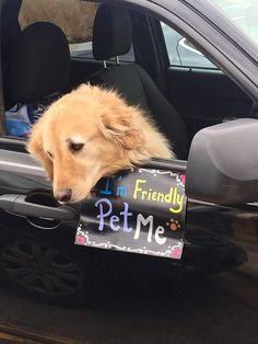Couldn't pet this little guy enough   http://ift.tt/2nWQzG0 via /r/dogpictures http://ift.tt/2nBCQn7  #lovabledogsaroundtheworld