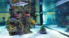 This aquarium is beautiful, especially with the rock feature. I like that the glass is on multiple sides and not just one. It adds dimension to the aquarium and makes it more open. The additional light coming through the glass adds to the ambiance as well.