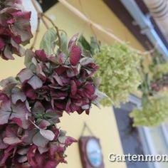 ber ideen zu hortensien trocknen auf pinterest hortensien hortensien pflege und. Black Bedroom Furniture Sets. Home Design Ideas