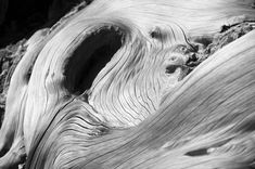 exploration of the fluidity of wood in ancient tree forms on the island of Crete Abstract Photography, Digital Photography, White Photography, Black And White, White Wood, Buy Art, Paper Art, Saatchi Art, Monochrome