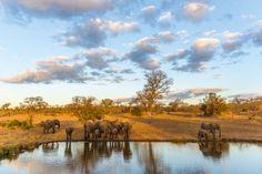 Best place to spot wildlife in 2015: Africa