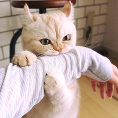 Top 25 Cute Kittens and Funny Cats I Love Cats, Crazy Cats, Cool Cats, Crazy Cat Lady, Kittens Cutest, Cats And Kittens, Kitty Cats, Pet Cats, Cats Bus