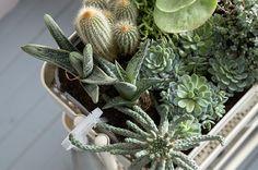 Wózek RÅSKOG – wózek, który służy jako domowy ogródek pełen kaktusów i sukulentów.