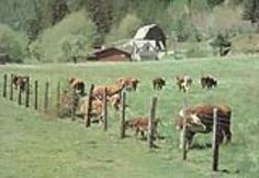 Raising Grass Fed Beef~Mother Earth News