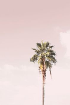 New York Discover Single Pink Palm Tree. Bedroom Wall Collage, Photo Wall Collage, Picture Wall, Photo Canvas, Aesthetic Backgrounds, Aesthetic Iphone Wallpaper, Aesthetic Wallpapers, Photo Deco, Tree Wallpaper