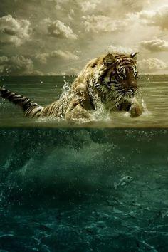 ♂ Masculine animals Swimming, Tiger, Ocean