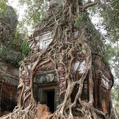 Koh Ker tower tree, Cambodia.  Photo by jumbokedama.  Ruins, dilapidated, decay, abandoned