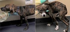 ASPCA arrests woman for starving two puppies