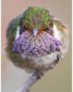 Oh my God!  Photography by @panama_wildlife #Wildgeography