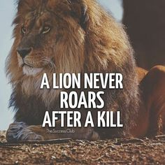 New Quotes About Strength Lion Heart 28 Ideas New Quotes, Wisdom Quotes, Motivational Quotes, Inspirational Quotes, Life Quotes, Daily Quotes, Reality Quotes, Success Quotes, Leadership Quotes