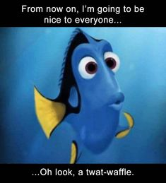 Afternoon Funny Picture Dump 33 Pics