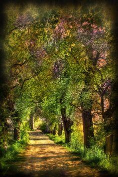 Más tamaños | Magic forest | Flickr: ¡Intercambio de fotos!