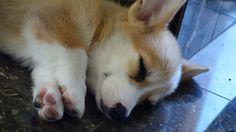 Sleepy pupster