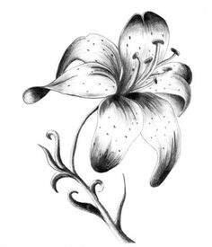 Stargazer Lily Tattoo Black And
