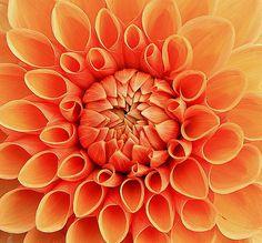 Oranje bloem, must have voor in een oranje interieur Gespot door www.kixx-safety.nl
