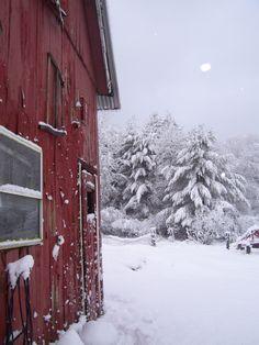 i love winter and a Red barn. I Love Winter, Winter Snow, Winter Christmas, Rustic Christmas, Christmas Time, Beautiful Winter Scenes, Snow Pictures, Winter Magic, Snow Scenes