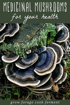 Herbal Medicine Learn more about six different medicinal mushrooms that have powerful health benefits. They will boost your immune system, mood, and give you energy! Growing Mushrooms, Wild Mushrooms, Stuffed Mushrooms, Edible Mushrooms, Healing Herbs, Medicinal Plants, Natural Medicine, Herbal Medicine, Ayurveda