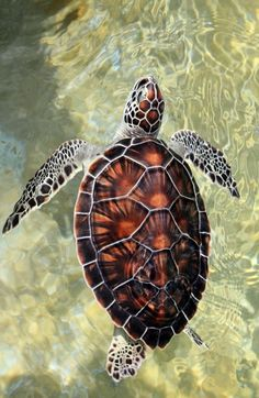 Good morning! #Turtle #ILikeTurtles #CrystalClearWater