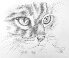 #cat #face #pencil #drawing #art #andanart Cat Face, Drawing Art, Graphite, Pencil Drawings, Cats, Animals, Pencil, Face, To Draw