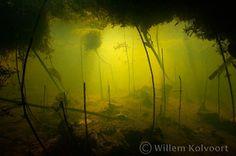 Herfstig doorkijkje Dark Photography, Underwater Photography, Biotope Aquarium, Underwater City, Aquarium Backgrounds, Water Nymphs, Rainbow Aesthetic, Aquascaping, Environmental Art