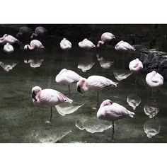 Flamingos poster från House of Beatniks är fotograferad av Pernilla Algede. Med en passion för det k...
