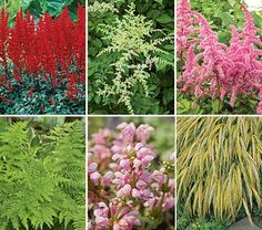 Create a serene oasis in shade with perennials that are as graceful as they are rugged, and, just as important to many gardeners, unpalatable to deer.