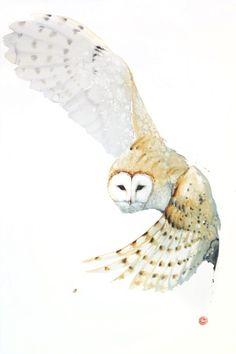 Barn Owl (unframed)