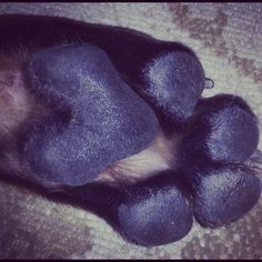 My dog wears his heart on his paw :)