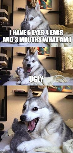 Bad Pun Dog | I HAVE 6 EYES 4 EARS AND 3 MOUTHS WHAT AM I UGLY | image tagged in memes,bad pun dog | made w/ Imgflip meme maker