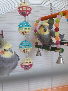 Ato💕loli Bird Wings, Cute Birds, Parrots, Coco, Cute Animals, Pets, World, Nymphs, Pretty Animals