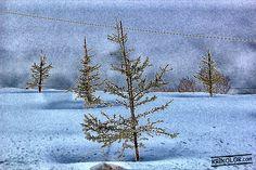 a winter shot