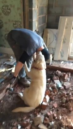 When can I halp build the woof? - - When can I halp build the woof? Knuddeliges Client's best friends wants to help. Funny Animal Videos, Cute Funny Animals, Funny Animal Pictures, Cute Baby Animals, Funny Dogs, Funny Memes, Animal Pics, Memes Humor, Cute Animal Humor