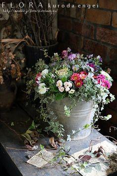 アンティークバケツに寄せ植えを。。。プリムラ・ハボタン・パンジーを使って |フローラのガーデニング・園芸作業日記 Love Garden, Garden Shop, Container Plants, Container Gardening, Garden Nursery, Deco Floral, Garden Markers, Foliage Plants, Flower Farm