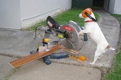 doggie help