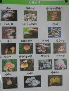 Korean mushrooms