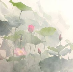 Surrounded by Lotus by Bahman Farzad ... beautiful #art