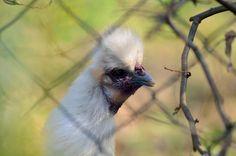 nur ein bild {46} Bird, Nature, Animals, Animais, Naturaleza, Animales, Animaux, Birds, Animal