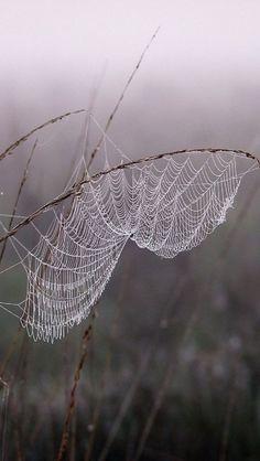 Cobweb Dew Fog, SubhanAllah!