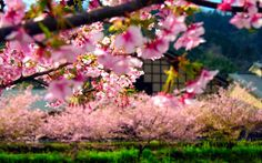 """Képtalálat a következőre: """"japán képek"""""""