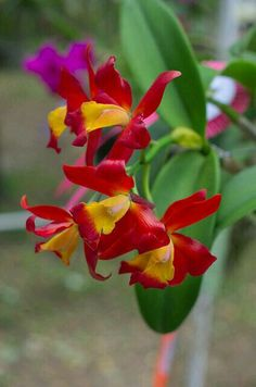Exotic Orchid!