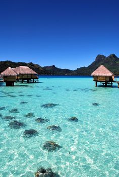 Bora Bora.. how do people leave these places? That would be hard to walk away from this to go back to a loud busy city.